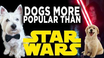 disney star wars is dead cause o 366x205 - Disney Star Wars Is Dead! Cause of Death? National Dog Day!
